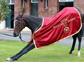 Treve after the Arc